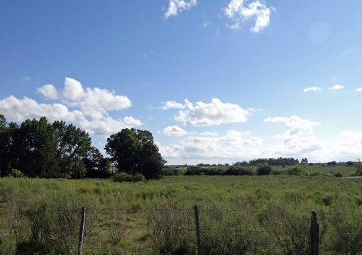 Campo sobre Ruta 7