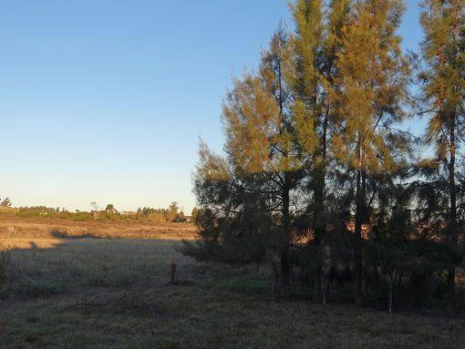 Campo próximo a Ruta 81