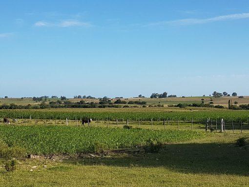 Campo próximo a Tala