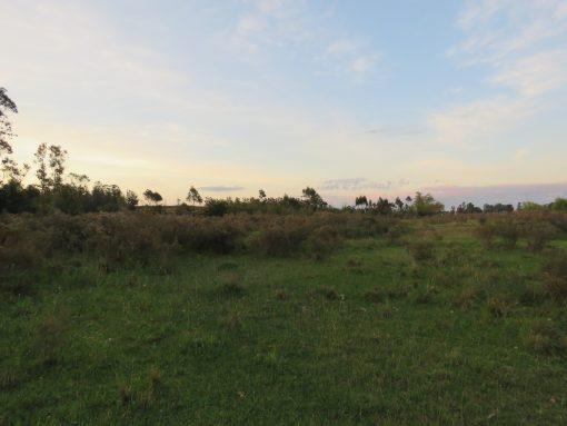 Campo próximo a Ruta 11